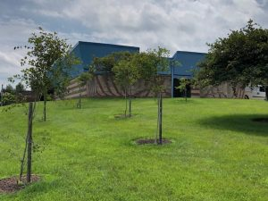 Wildlife preservation trees